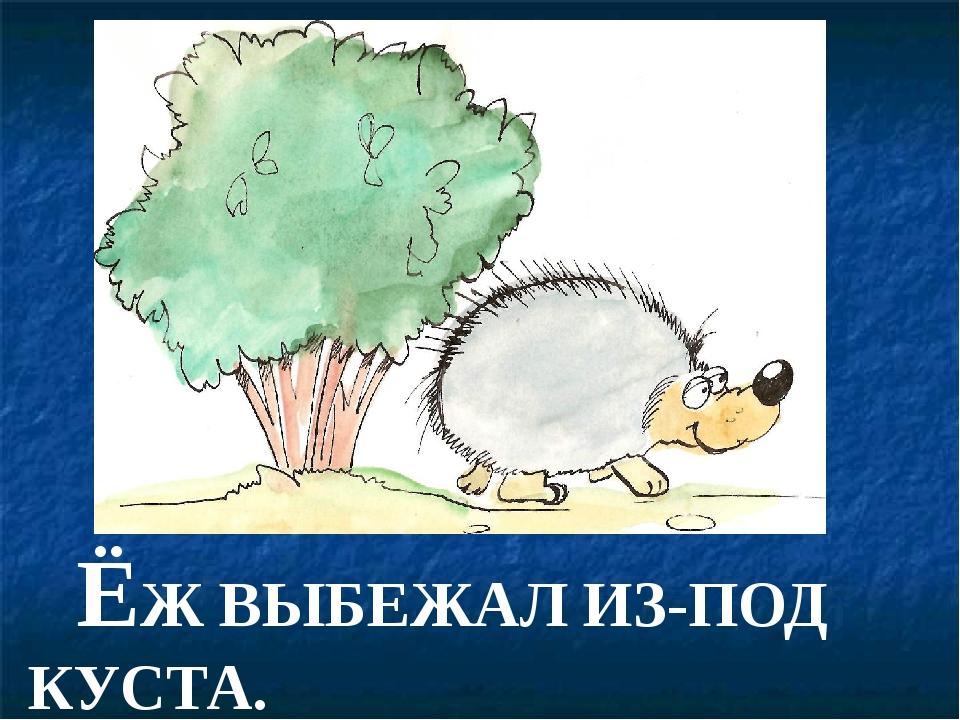 ЁЖ ВЫБЕЖАЛ ИЗ-ПОД КУСТА.