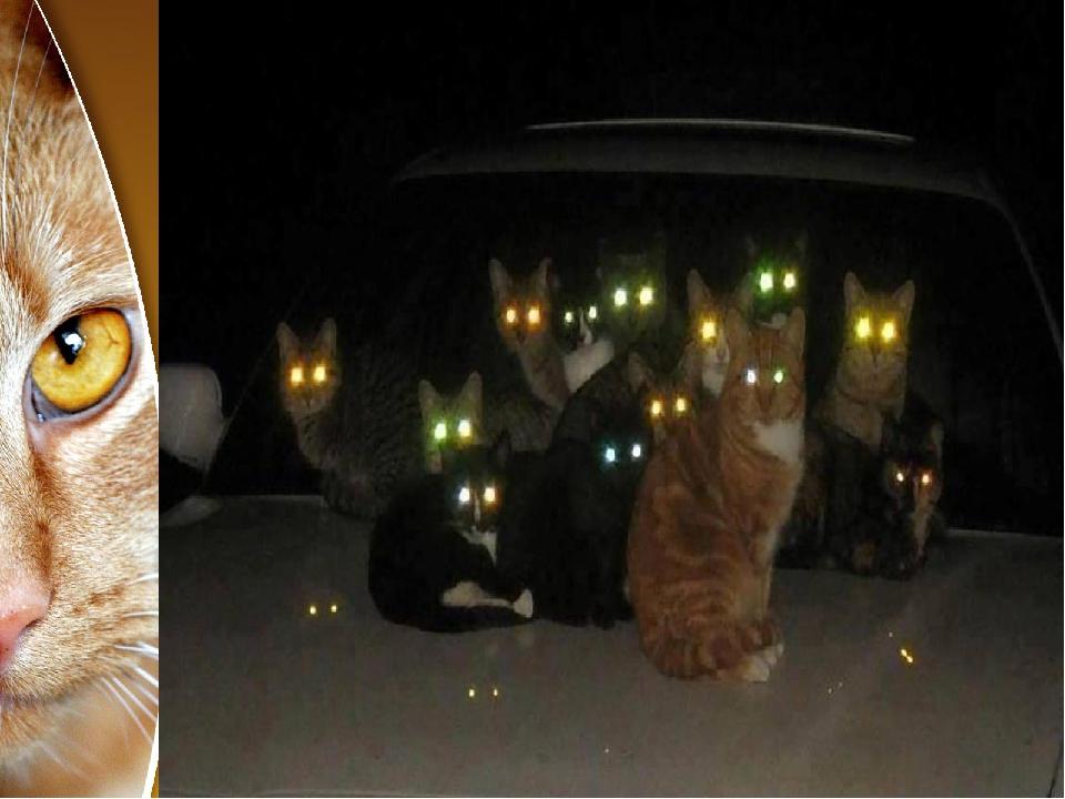 спального у кошки светятся глаза картинки очень вкусной полезной