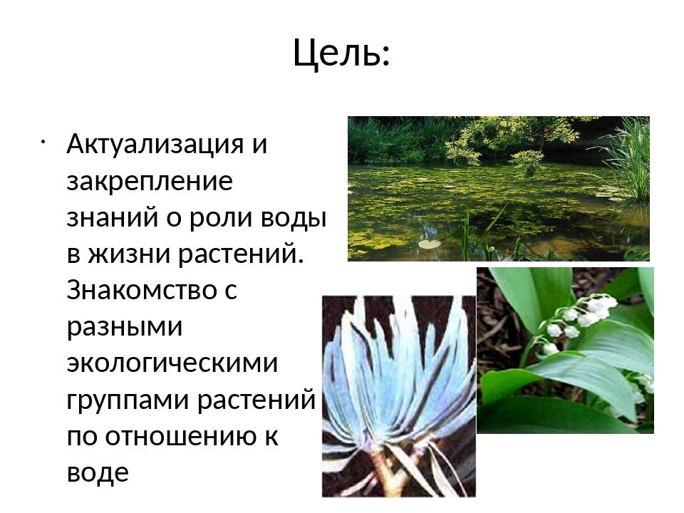 Цель: Актуализация и закрепление знаний о роли воды в жизни растений. Знакомс...