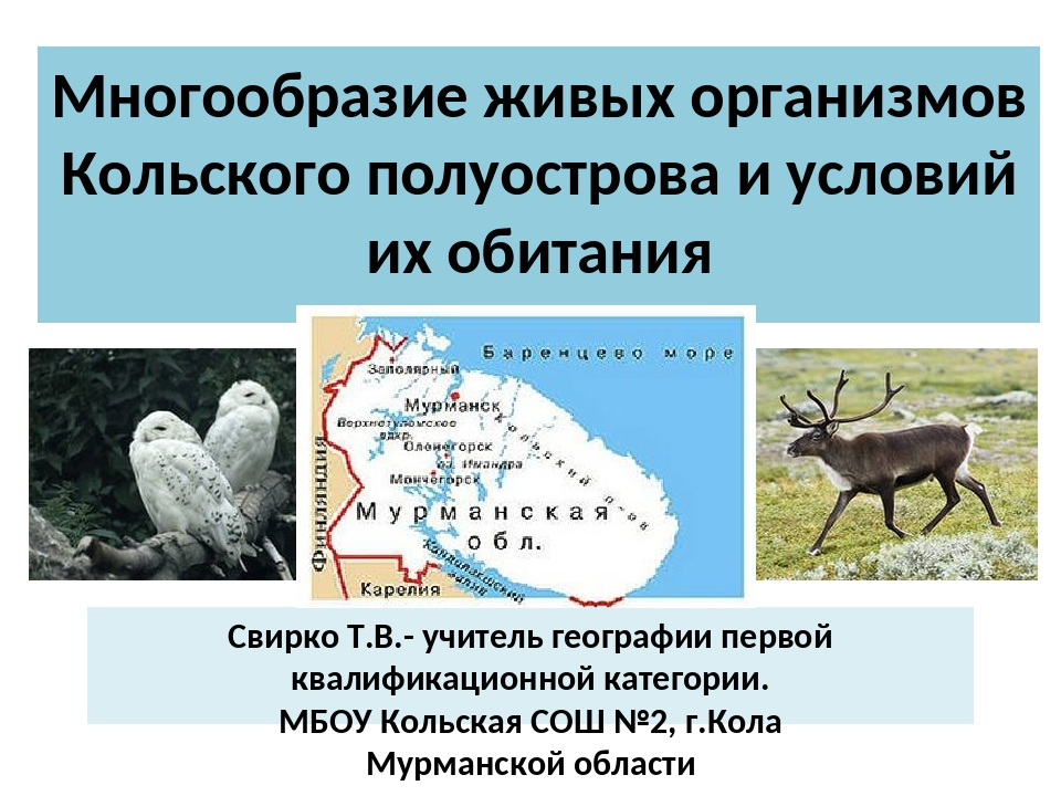 Многообразие живых организмов Кольского полуострова и условий их обитания Сви...