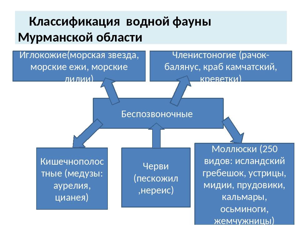 Классификация водной фауны Мурманской области Иглокожие(морская звезда, морс...