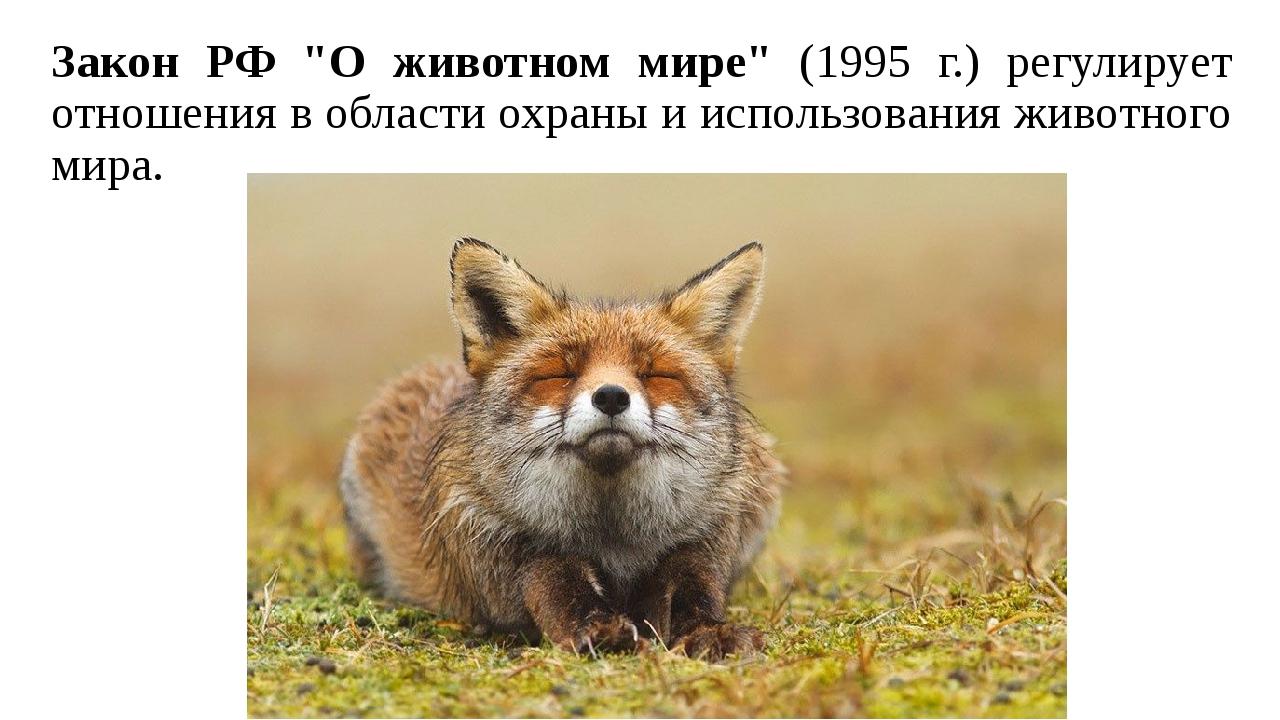 """Закон РФ """"О животном мире"""" (1995 г.) регулирует отношения в области охраны и..."""