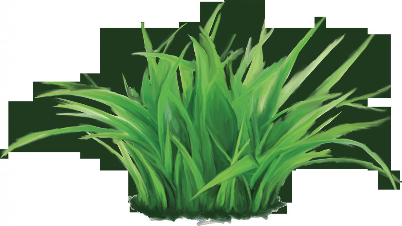 Картинка травка зеленая для детей