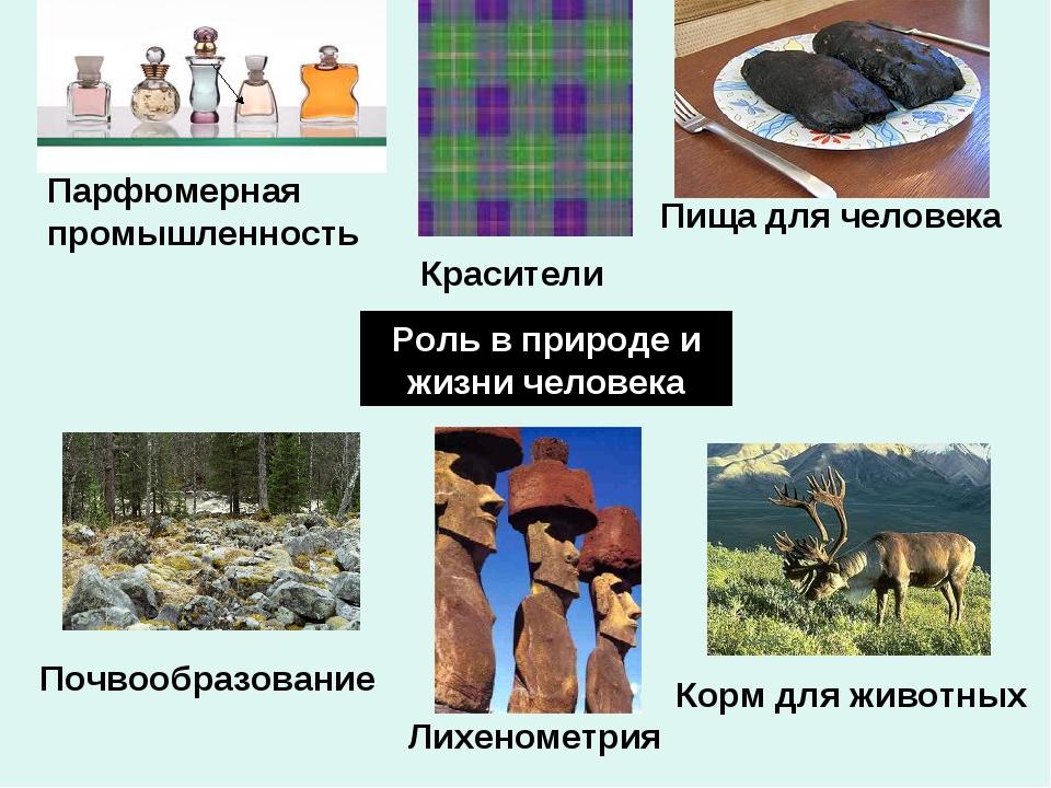 Роль в природе и жизни человека Почвообразование Корм для животных Пища для ч...