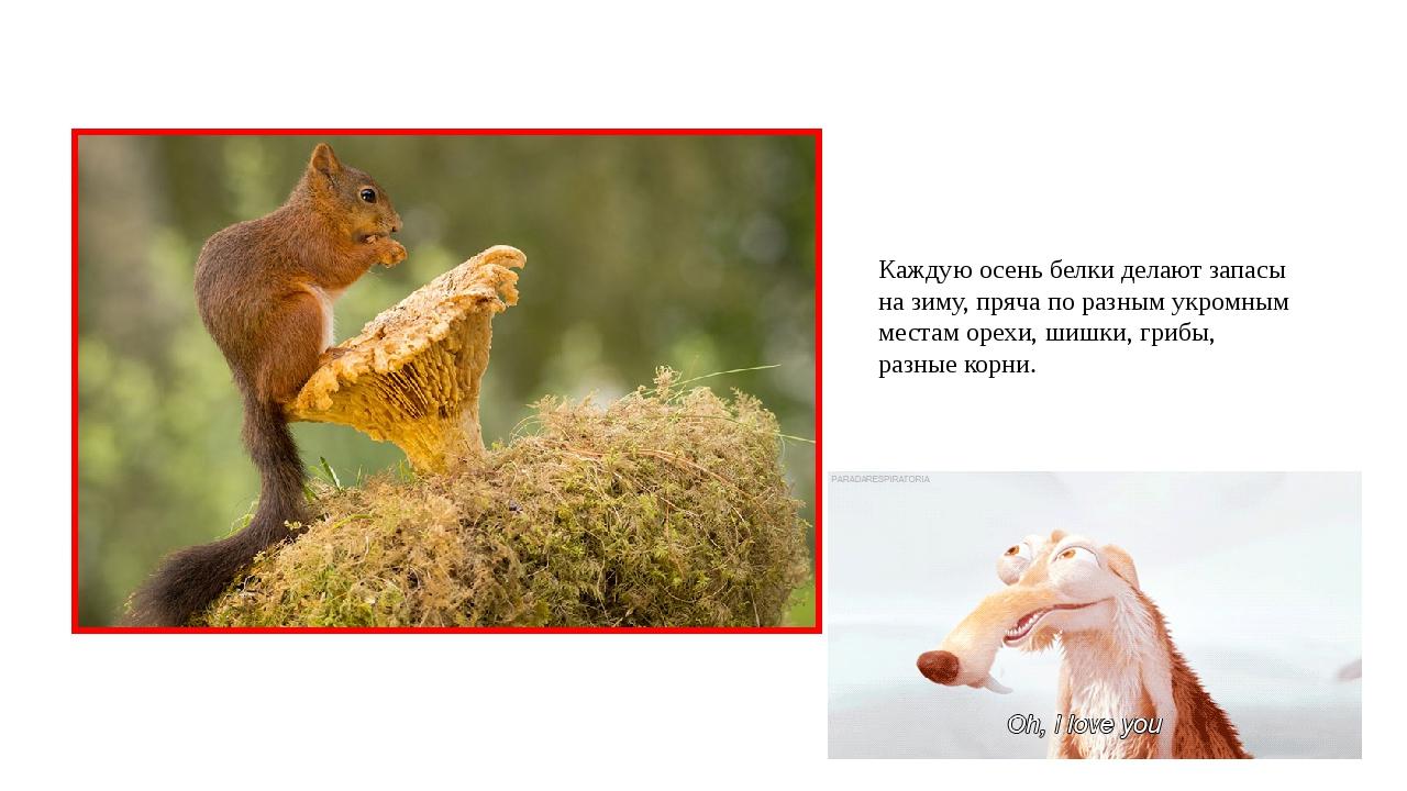 Каждую осень белки делают запасы на зиму, пряча по разным укромным местам оре...