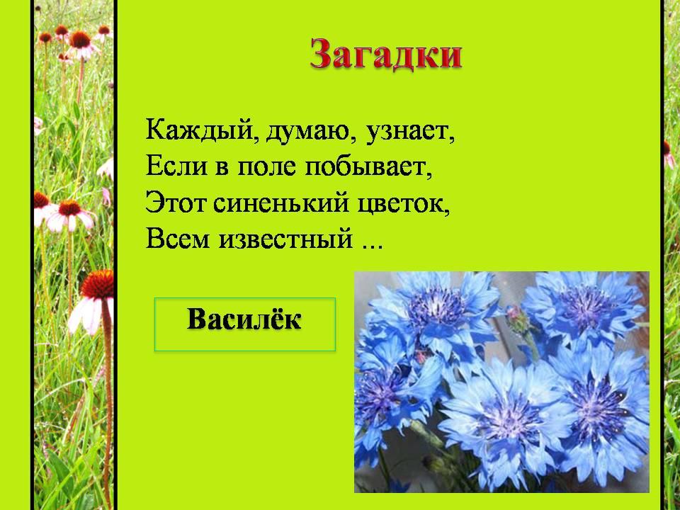 вдохновил загадки про цветы с картинками что