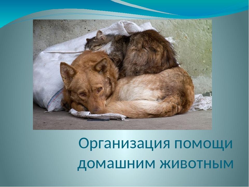 Организация помощи домашним животным