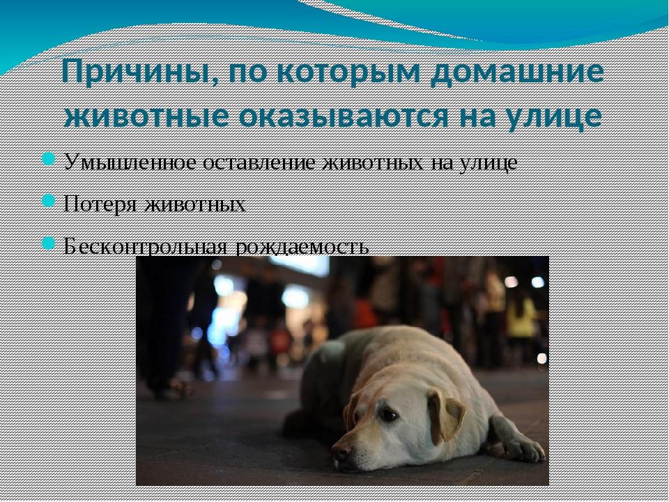 Причины, по которым домашние животные оказываются на улице Умышленное оставле...