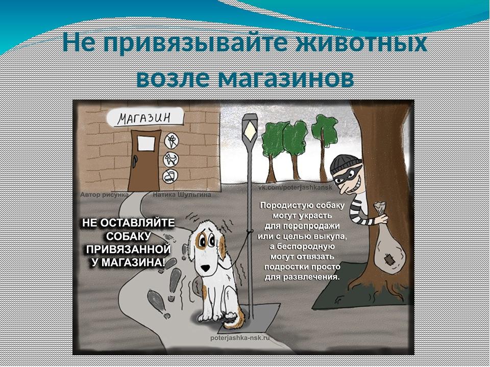 Не привязывайте животных возле магазинов