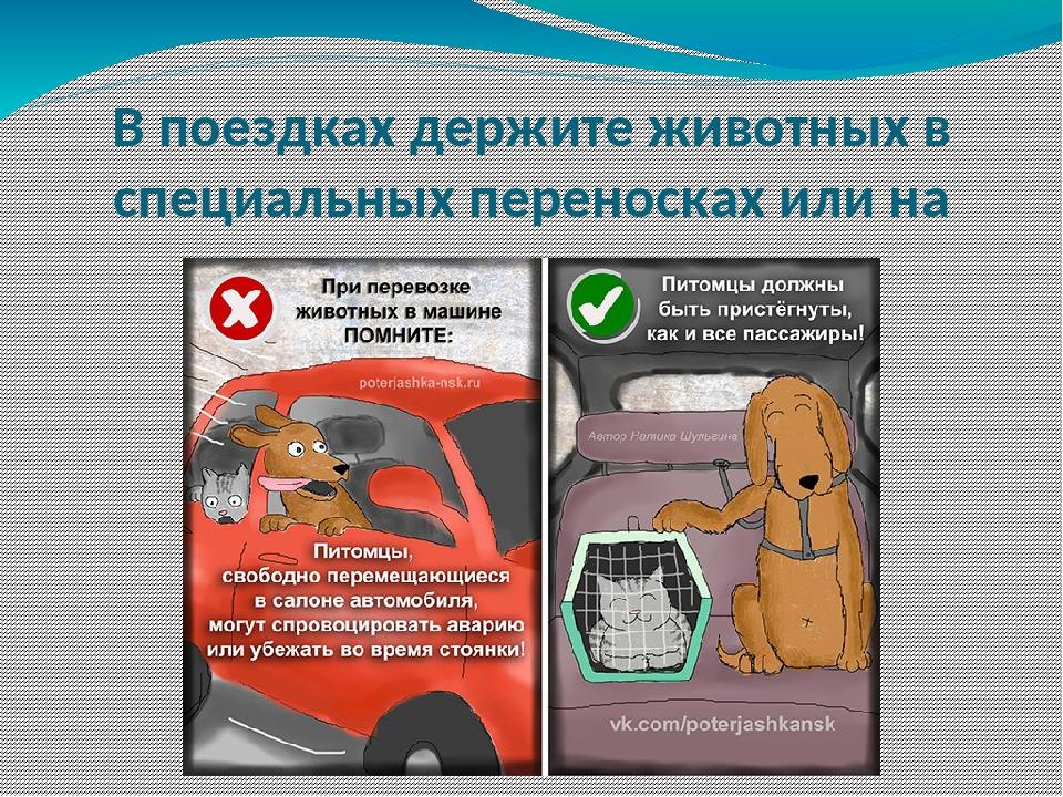 В поездках держите животных в специальных переносках или на поводках
