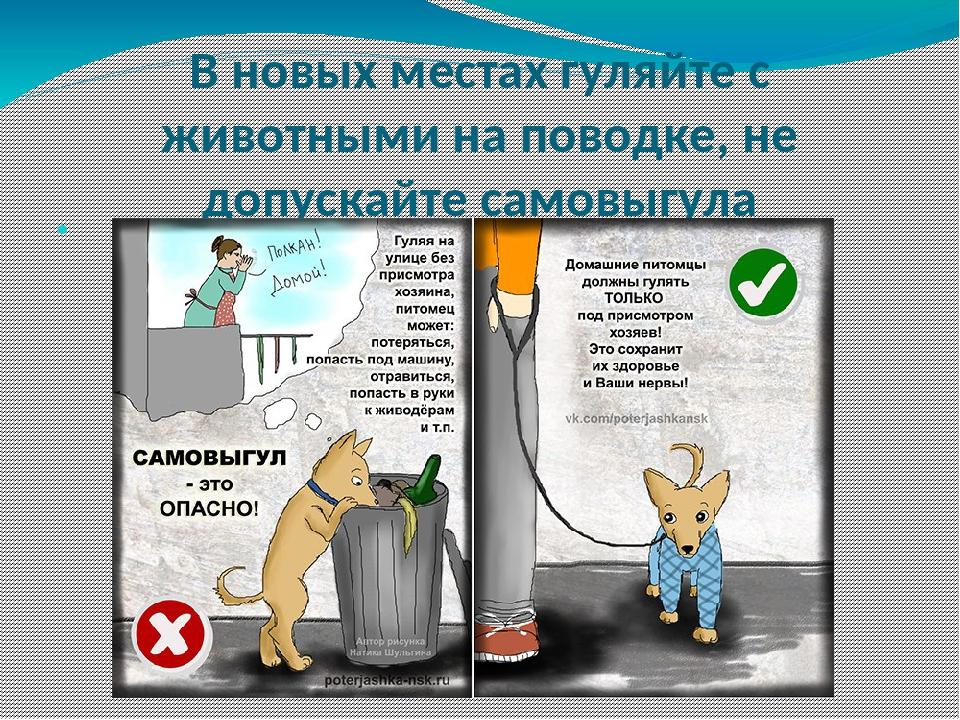 В новых местах гуляйте с животными на поводке, не допускайте самовыгула