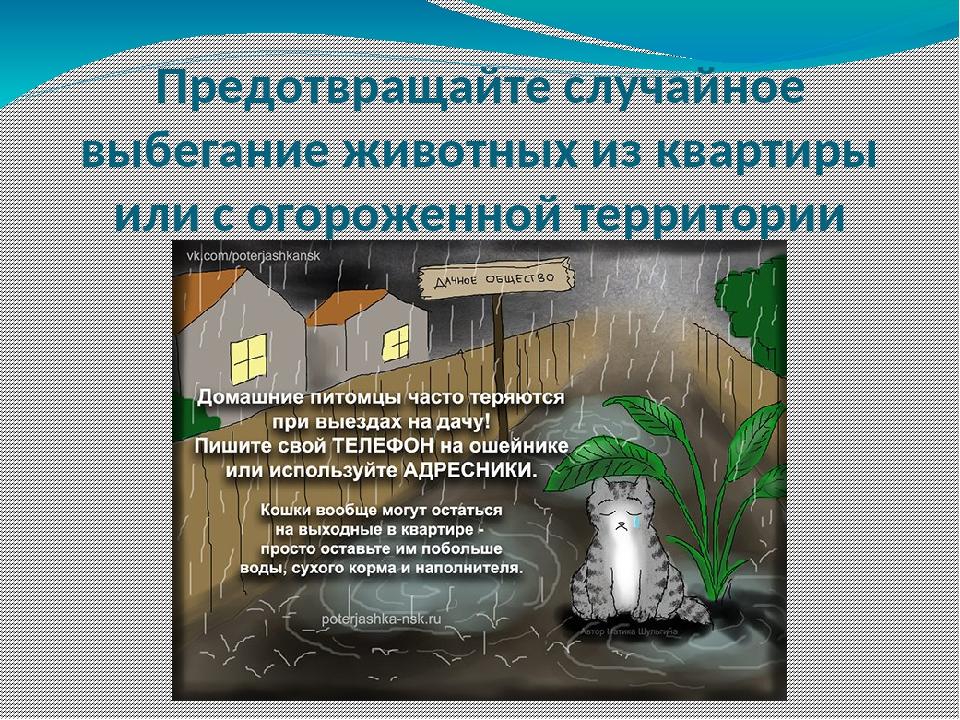 Предотвращайте случайное выбегание животных из квартиры или с огороженной тер...