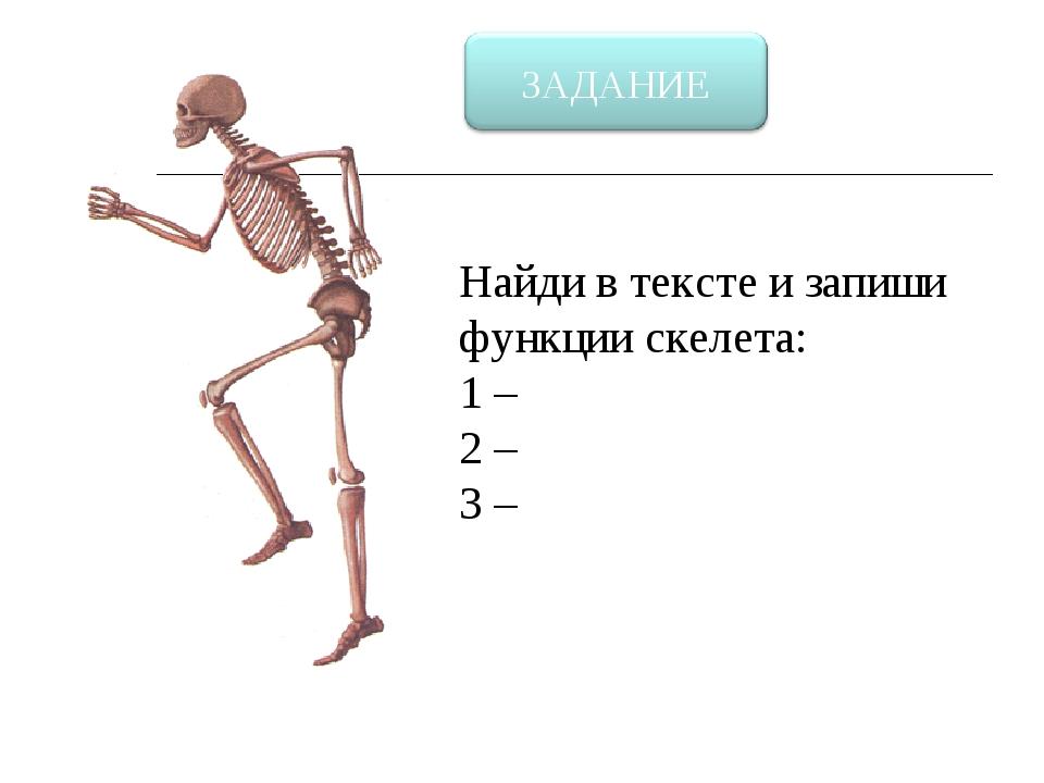 Найди в тексте и запиши функции скелета: 1 – 2 – 3 –