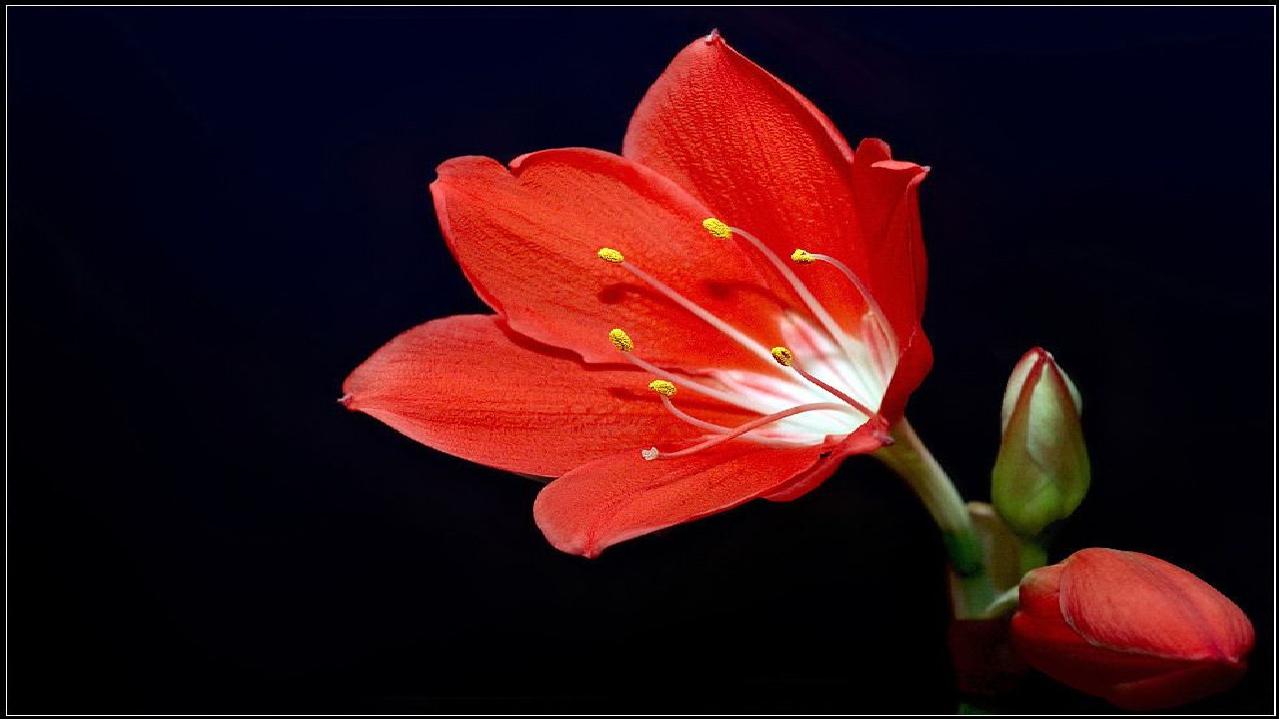 красивое фото аленького цветочка еще одно кафе